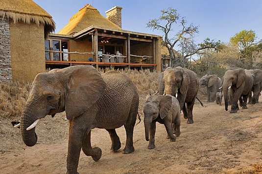 Private Zindoga Villa  Elephants Deck Camp Jabulani Big 5 Kapama Private Game Reserve Greater Kruger South Africa