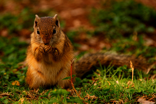 Squirrel - Kruger National Park Accommodation Bookings